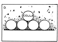 "Bacteriol. 25, 277-286 (1933) aus C. E. Zobell: ""The effect of surfaces on bacterial activity"", J. Bacteriol."