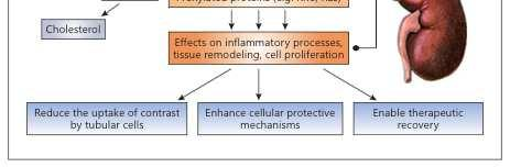 Statins may be renoprotective via several mechanisms.