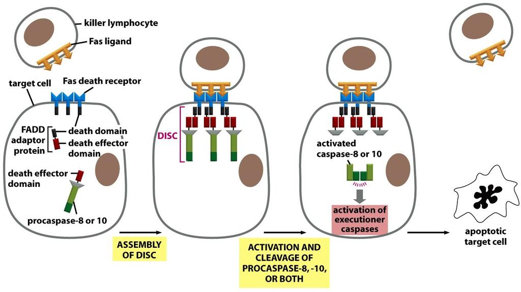 Figure 18-6 Molecular Biology of