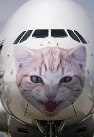 Da BIRD STRIKE